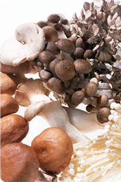 Our Mushrooms Mushrooms and Immune Wellness